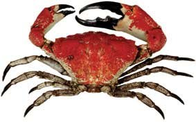 giant-crab-3.jpg