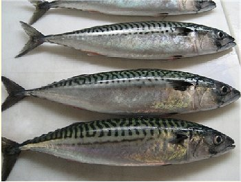 Whole Foods Mackerel